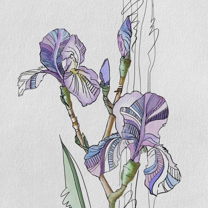 Watercolor painting of Purple Irises using Procreate app